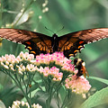 The Butterfly And The Bumblebee by DigiArt Diaries by Vicky B Fuller