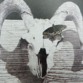 The Butterfly And The Skull by David Ackerson