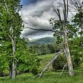 The Buzzard Trees by Pete Hellmann