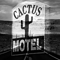 The Cactus Motel by David Lee Thompson
