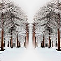 The Calm Of Winter In The Woods by Rod Jellison