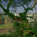 The Canopy by Brian Kamprath