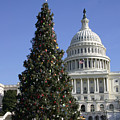 The Capitol Christmas Tree Is Decorated by Stephen St. John