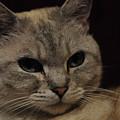 The Cat by Daniela White