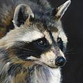 The Cat Food Bandit by J W Baker