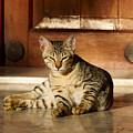 The Cat by Jouko Lehto