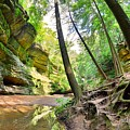 The Caves And Trail At Old Man's Cave Hocking Hills Ohio by Lisa Wooten