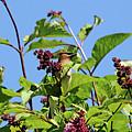 The Cedar In The Lilac by Debbie Oppermann