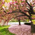 The Cherry Tree by Jessica Jenney
