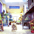 The Chocolaterie Dog, France by Jean Gill