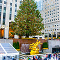 The Christmas Tree At Rockefeller Center New York City by William Rogers