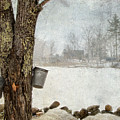 Collecting Sap For Making Maple Syrup by Betty  Pauwels