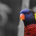 The Colorful Bird by Erik Dunn