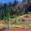 The Colors Of Autumn by Emerita Wheeling