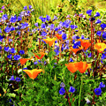 The Colors Of Spring  by Saija  Lehtonen