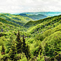The Colors Of The Smokies by Kay Brewer