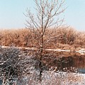The Colors Of Winter by Jennifer Englehardt