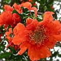 The Colour Orange by Gwyn Newcombe