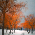 The Colours Of Winter by Tara Turner