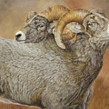 The Conquest - Bighorn Sheep by Johanna Lerwick