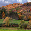 The Cows Are In The Dell  by Jeff Folger