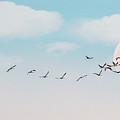 The Cranes Flew Over The Moon by Elizabeth Winter