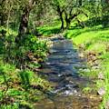 The Creek by Jim Thompson