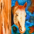 The Curious Appaloosa by Sharon Mick