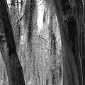 Cypress In The Bayou by Jenny Regan