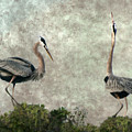 The Dance Of Life - Great Blue Herons In Mating Ritual - Digital Painting by Mitch Spence