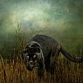 The Dark Destroyer by Brian Tarr
