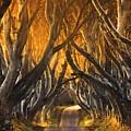 The Dark Hedges IIi by Pawel Klarecki
