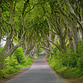 The Dark Hedges by Roland Hall