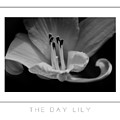 The Day Lily Poster by Mike Nellums