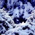 The Deep Blue - Winter Wonderland In Switzerland by Susanne Van Hulst
