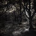 The Deep Forest by Angel  Tarantella