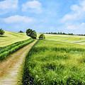 The Derbyshire Dales by Sean Afford