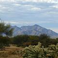 The Desert Landscape by Teresa Stallings