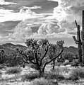 The Desert Speaks by Jack Sassard