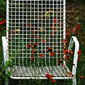 The Devils Chair by Debbie Oppermann