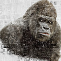 The Dignity Of A Gorilla by Anthony Murphy