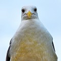 The Disapproving Seagull by Lori Leigh