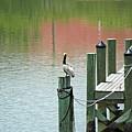 The Dock by Terri Mills