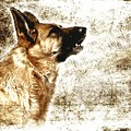 The Dog Speaks by Angie Tirado
