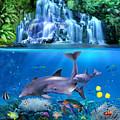 The Dolphin Family by Glenn Holbrook