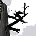 The Dragon Tree by Sin D Piantek