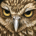 The Dubious Owl by Pat Erickson