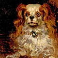 The Duke Of Marlborough. Portrait Of A Puppy by James Carroll Beckwith