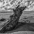 The Sleeping Bear Dunes Black And White  by John McGraw