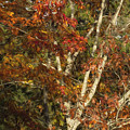 The Dying Leaves' Final Passion by Belinda Greb